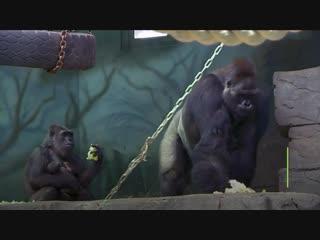 В московском зоопарке пополнение