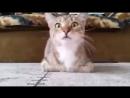Кот смотрит фильм ужасов Классная реакция кота