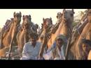 Лики Индии / Faces of India (2011г.). 3-я серия - Племя рабари из пустыни Тар, странники пограничных земель