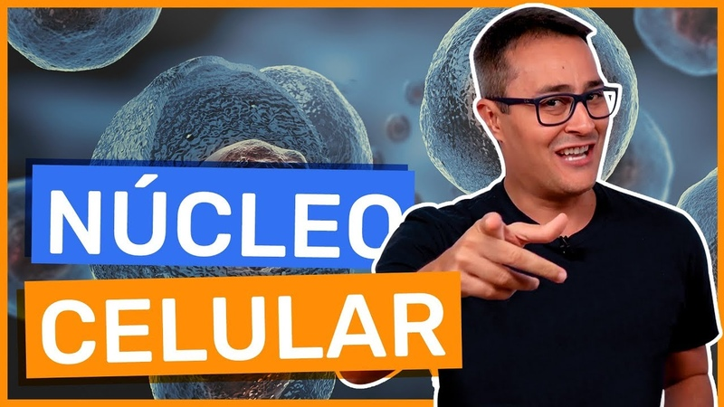 Núcleo Celular   Biologia   Prof. Paulo Jubilut