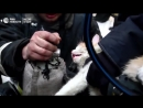 Спасатели откачали кислородом кота на пожаре в Волгограде