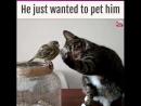 воробей и сочувствующий кот