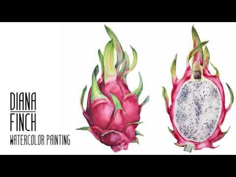 [Botanical Illustration] Pitaya, Dragon Fruit. Watercolor speed paint by Diana Finch