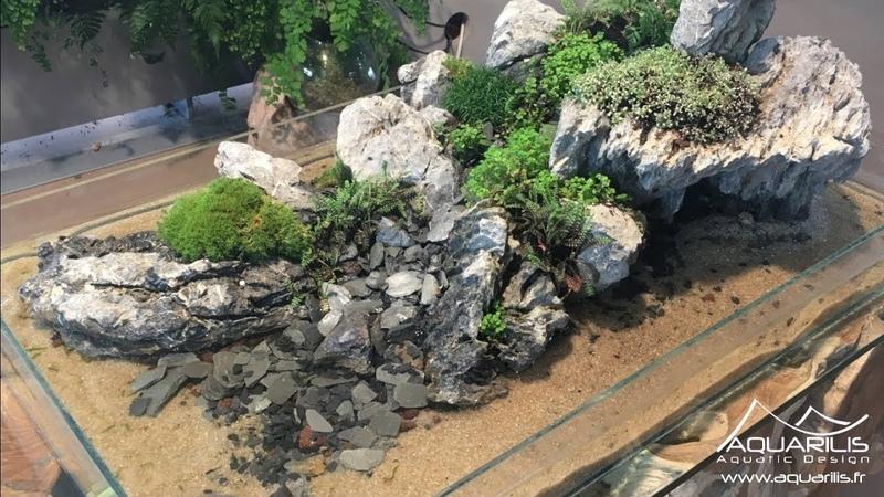 Penjing lIle, un mélange de paludarium, daquascaping et de paysagisme végétal