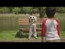 Love Юная Любовь 2009 Япония Мелодрама Романтика с русской озвучкой 720p