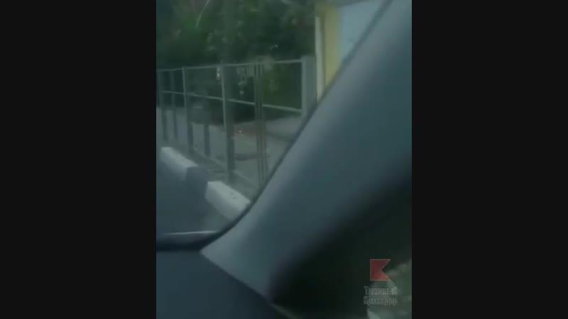 Испуганная косуля на улицах Сочи