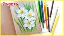 Листья нарцисса рисуем и раскрашиваем цветными карандашами 2 часть