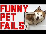 Funny Pet Fails: Lock The Doggy Door! (August 2017)    FailArmy