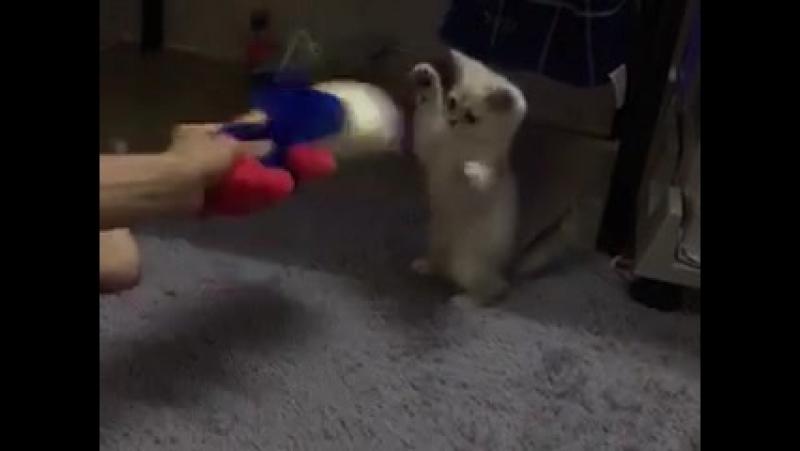 Kung Fu Cat master