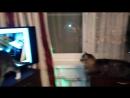 Гоша и кот-парад