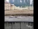Купание слона в ростовском зоопарке 20.5.2018 Ростов-на-Дону Главный