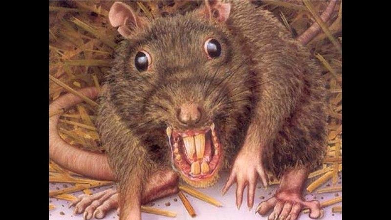 Крысы фильм ужасов HD