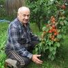 Северное садоводство | Тайны деревьев