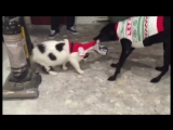 Смешные приколы про кошек и котов 2018