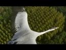 Полёт птицы сборное видео