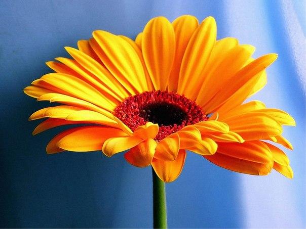 Будьте нежным, как цветок, когда речь идет о доброте, и резким, как гром, когда речь идет о принципах. Будьте всегда учтивы и вежливы, но не позволяйте собой манипулировать. Позаботьтесь, чтобы к вам всегда относились с уважением.