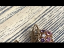 Серьги клевер золото 585 сапфиры и бриллианты