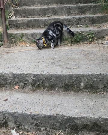 Lia_m_g video