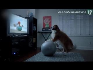 Собакен решил похудеть