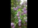 VID_93070720_035055_450.mp4