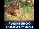 Пёс спасаясь от жары нашёл единственно верный способ освежиться