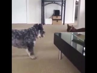 Очень авторитетный кот