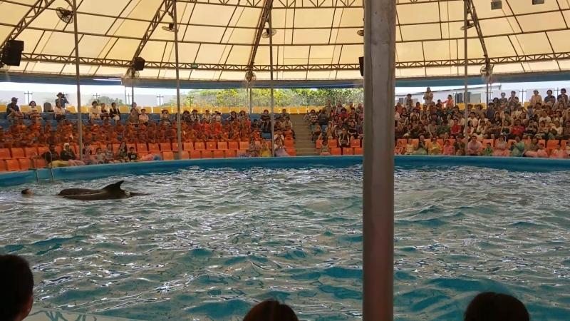 Дельфин-Шоу часть 4(они самые)о.Пхукет,Тайланд апрель 2018 » Freewka.com - Смотреть онлайн в хорощем качестве