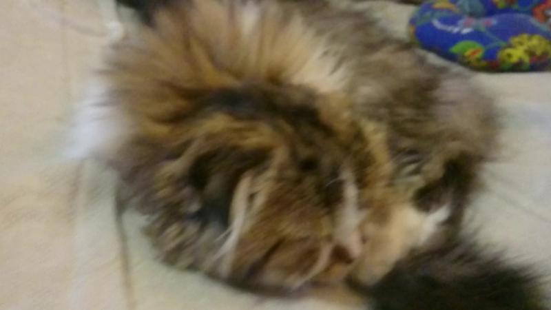 Dulcinea Nika cats