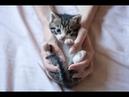 КАК ПРАВИЛЬНО ВОСПИТАТЬ КОТЕНКА HOW TO RAISE A KITTEN