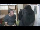 Koko the Gorilla, Famous for Learning Sign Language, Has Died