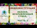 ЯБЛОНЯ: ствол. Часть 2. Видеоинструкция от Питомника Сады Урала