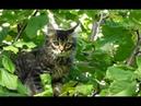 Навоз котёнок и онлайн полёт на Мавике