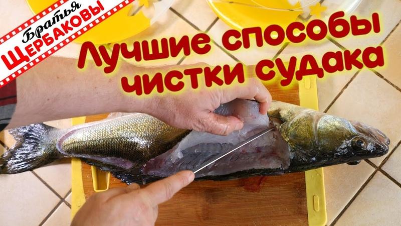 Лучшие два способа чистки и обработки судака. Братская кухня (Братья Щербаковы)