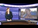 Chaîne YT - AKH TV - 05.Pizzagate - Est-ce-que le voile se lève sur l'affaire « Pizzagate » -