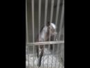 коза ищет дом