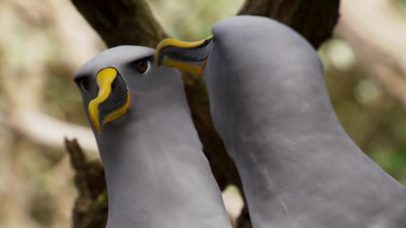 Альбатрос: на острове миллионы птиц, но лишь одна важна для него / 2016 Планета Земля 2: Острова/ВВС. Planet Earth II/ Islands