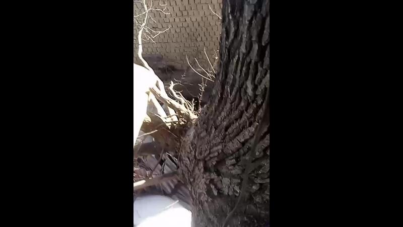 Дом на дереве,часть 1