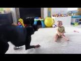 ЗАБАВНЫЕ Малыши и котики ! КЛАССНАЯ подборка! FUNNY VIDEOS Funny Cats