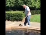 Вышел на прогулку с домашними животными
