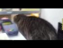 Приколы с котами и кошками для поднятия настроения Подборка приколов и неудач со смешными котейками