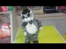 Танцующий и поющий кот