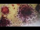 Реакция кислоты и соды под микроскопом