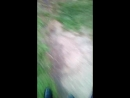 Гуляем*-ищем приключения в жопу
