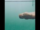 Ничего не обычного просто собака под водой 🐕