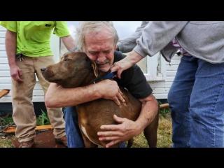Добрые поступки людей, которые ценят  животных