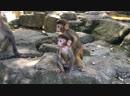 остров обезьян 🐒