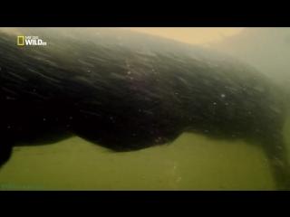 «Дикая Колумбия (2). Сьерра-де-ла-Макарена: Сокровищница природы» (Познавательный, природа, животные, 2014)