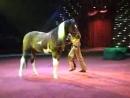 Comic Cowboy Horse Moscow Circus Цирковой номер Комический Ковбо low