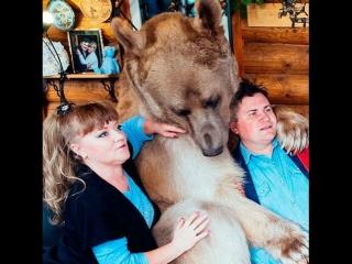 Домашнее животное  медведь