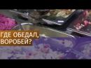 В магазине Тюмени воробей ел салаты с прилавка